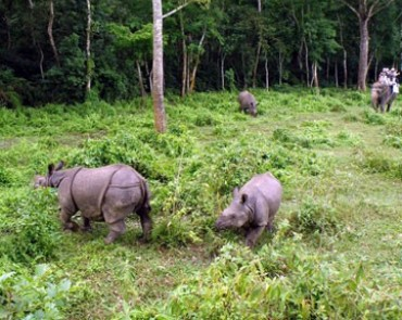 Bardiya Jungle Safari